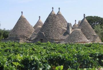 vineyard-in-the-trulli-aera-copie